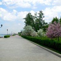 На цветущей набережной Самары :: Надежда