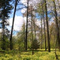 Весной в лесу :: владимир тимошенко