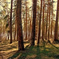 Прибрежный лесок :: Raduzka (Надежда Веркина)