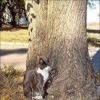 Под защитой большого дерева :: Нина Корешкова