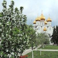 Ярославль, красота майского цветения :: Николай Белавин