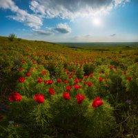 Волна цветов :: Фёдор. Лашков
