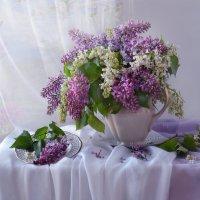 Симфонии майского утра... :: Валентина Колова