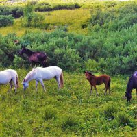 Бродят кони :: Сергей Чиняев