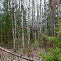 В майском лесу :: Натала ***