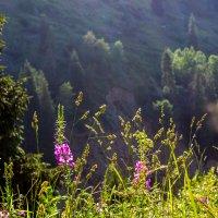 В горах :: Светлана SvetNika17