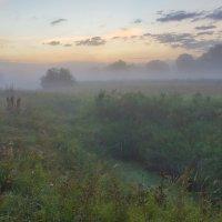 В рассветных пойменных туманах... :: Igor Andreev