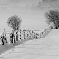 зима, забор :: raimis