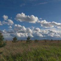 Облака... на фоне будущего леса. :: Михаил Полыгалов