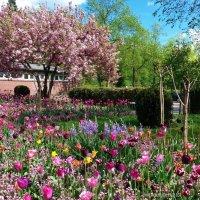 Гамбург. Ботанический сад :: Nina Yudicheva