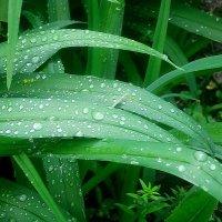 После дождя :: Елена Семигина