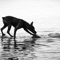 хождение по воде :) :: Нелли Рахматуллина