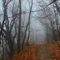 Осенние тропы........ :: Юрий Цыплятников