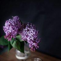 Майское чаяпитие :: Зинаида Манушкина