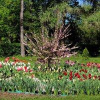 Тюльпанов майское цветение :: Надежд@ Шавенкова