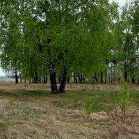 Майский лес :: Нэля Лысенко