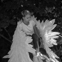 wings :: Vitaliy Dankov