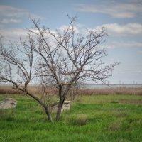У озера Сасык :: anderson2706