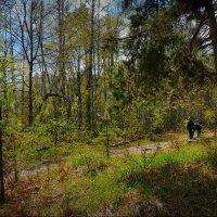 На лесной тропе! :: Владимир Шошин