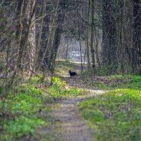 на лесной дорожке :: оксана