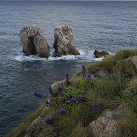 ... и цветы на берегу :: Galina
