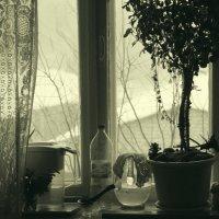 пью кофе и смотрю в окно :: Елена Минина