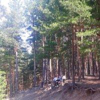 После школы в лесу отдохнуть... :: Олег Афанасьевич Сергеев