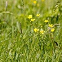 Весна в лугах :: Валерий