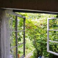 окна в сад :: Владимир