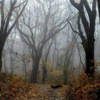 Тропы осенние...... :: Юрий Цыплятников