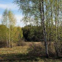 Апрельский вечер в долине Исьмы :: Сергей Курников