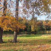 Осенний парк в Сергееве :: Сергей Пиголкин