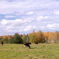 Осенний луг :: Сергей Пиголкин