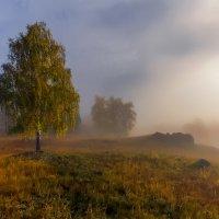 Туманное утро :: Максимка