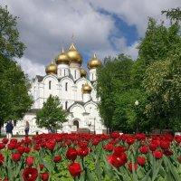Золотые купола, алые тюльпаны ярославской весны :: Николай Белавин