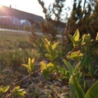 Весна и новая жизнь :: Lijka