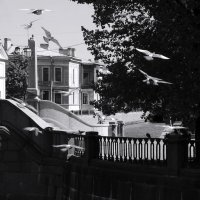 Птицы над мостом :: sv.kaschuk
