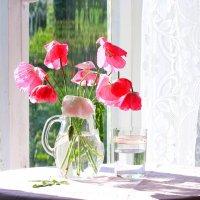 Про цветы :: Наталья Казанцева