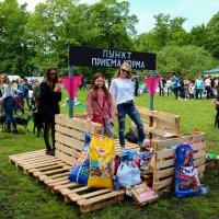 благотворительная выставка-фестиваль бездомных животных :: Юрий Шамсутдинов