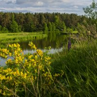 Весеннее цветение :: Владимир Ефимов