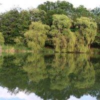 Mirror on lake :: Nikola Ivanovski