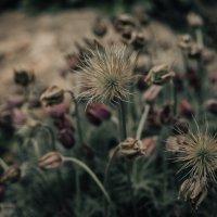 Цветы не то, чем кажутся :: Iulia Efremova