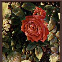Картина «Майская роза» :: Владимир Бровко