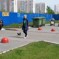 Тихая жизнь двора :: Валерий Михмель