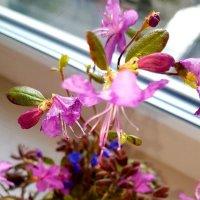 Весна на окошке :: Светлана