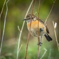 Сурьезный птиц :: Георгий Кулаковский