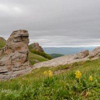 на плато Демерджи :: Андрей Козлов
