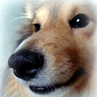 Любимый нос :: Евгения Х