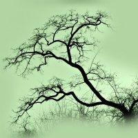 Сон ЛЕТНИЙ .(Из серии-И снятся деревьям сны разноцветные.) :: ЛЮБОВЬ ВИТТ