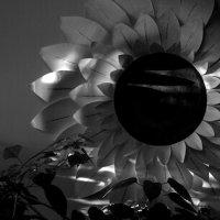 Свет и бумажный цветок :: Николай Филоненко